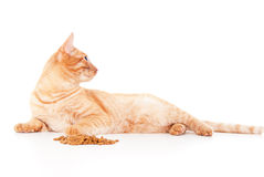 Red cat lying near the feed Stock Photos