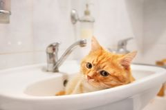Red cat lying in the sink in the bathroom royalty free stock images