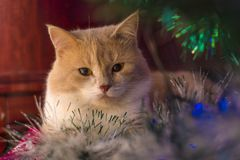 Red cat lying under the tree on New Year stock image