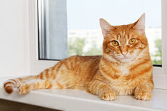 Red cat lying on window sill. Closeup photo of domestic red cat lying on window sill and looking at camera Stock Photos