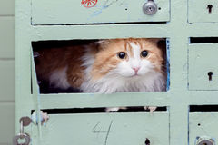 Red cat in mailbox Stock Photos