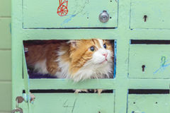 Red cat in mailboxes Stock Images