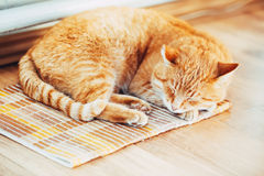 Red Cat Male Kitten Sleeping In His Bed On Royalty Free Stock Photo