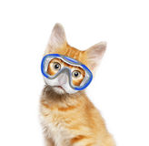 Red cat with mask for diving Stock Photography