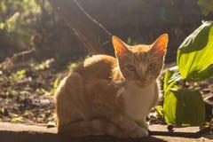 Red cat in morning haze in garden. Adorable cat looking at camera outdoor. Cute pet concept. Orange sitting kitten. Red cat in summer sunlight stock photo