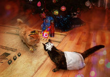 Red cat and motley cat in fancy dresses Royalty Free Stock Photography