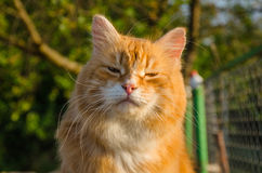 Red cat. With a mustache closeup on the background of trees Royalty Free Stock Images