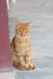 Red cat. In the natural environment Stock Images