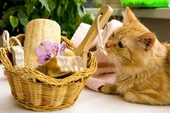 Red cat near a basket for bathroom, pumice, luff,  alstroemeria. Flower, body brush, shells, handmade soap with the addition of sand for heels Royalty Free Stock Photo