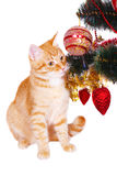 Red cat near the Christmas tree branches Stock Images