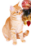 Red cat near the Christmas tree branches Royalty Free Stock Photography