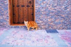 Red Cat near wooden door on the toun street. Cat near wooden door on the street Stock Image