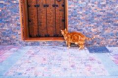 Red Cat near wooden door on the toun street. Cat near wooden door on the street Stock Photo