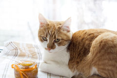 The red cat and orange jam in glass jar, selective focus Royalty Free Stock Photography