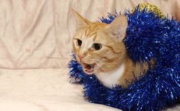 Red cat peeking out of the tinsel royalty free stock image