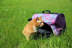 Red cat in pet carrier Stock Photo