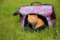 Red cat in pet carrier Royalty Free Stock Photography