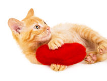 Red cat plays with a heart Stock Photography