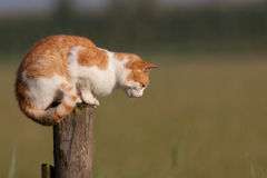 Red cat on a pole. Staring at the ground Stock Photos