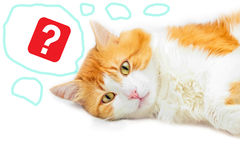 Red cat and question mark royalty free stock photo