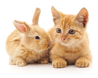 Red cat and rabbit. Red cat and rabbit on a white background Stock Photography