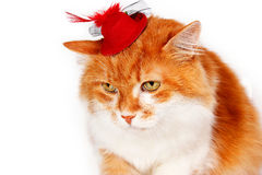 Red cat in red hat with plumage Stock Photos