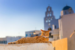 Red cat relaxing Royalty Free Stock Photography