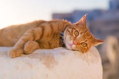 Red cat relaxing Stock Photo