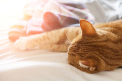 Red cat relaxing in sun Royalty Free Stock Image