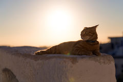 Red cat relaxing Royalty Free Stock Image