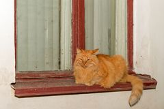 Red cat rest on the windowsill. On a rainy day Stock Images