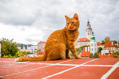 Red cat on the roof of Cesky Krumlov Stock Photo