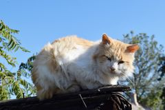Red cat on the roof. Of the shed in the autumn cold Stock Photos