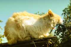 Red cat on the roof. Of the shed in the autumn cold Royalty Free Stock Photography