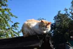 Red cat on the roof Stock Images