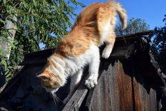 Red cat on the roof Royalty Free Stock Photography