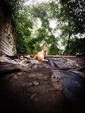 Red cat on the roof. A street cat ready to run away on the roof Royalty Free Stock Photo
