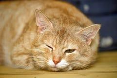 Red cat is sad Stock Photo