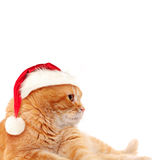 Red Cat in Santa Hat. Christmas Concept Stock Photo
