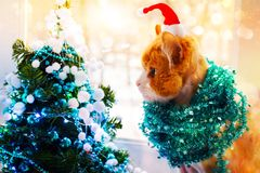 Red cat in Santa`s cap with tinsel sits and looks at the elegant Christmas tree in turquoise colors stock photography