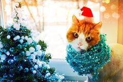 Red cat in Santa`s cap with tinsel sits next to an elegant Christmas tree in turquoise colors and looks into the lens royalty free stock photos