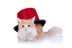Red cat with show hat Royalty Free Stock Images