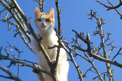 Red cat. Shy cat climbs a tree Royalty Free Stock Photography