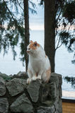 Red cat sits on a background of the sea. In high quality Royalty Free Stock Image
