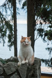Red cat sits on a background of the sea. In high quality Royalty Free Stock Photos