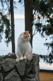 Red cat sits on a background of the sea. In high quality Stock Photography