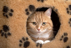 Red cat sits in a small house royalty free stock images