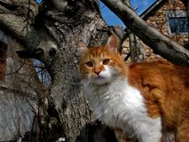 Red cat sits on a tree and looks with big ginger eyes stock photo