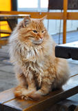 Red cat sitting on the bench. Stock Photos