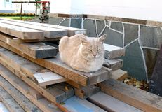 Red cat sitting on the boards. Sleeping street cat. Wooden planks and a cat. stock photos